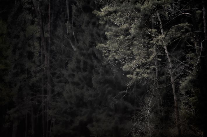 Mai13-Trees_MG_5122