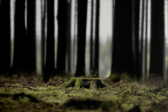 Mai13-Trees_MG_5159