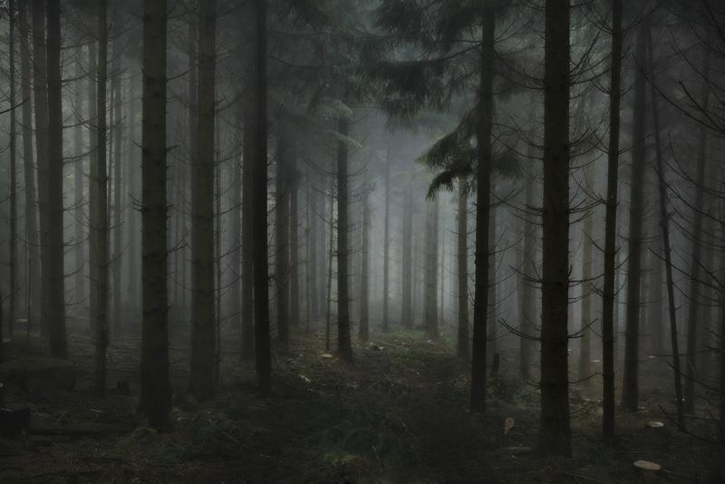 Forest Oktober 2016
