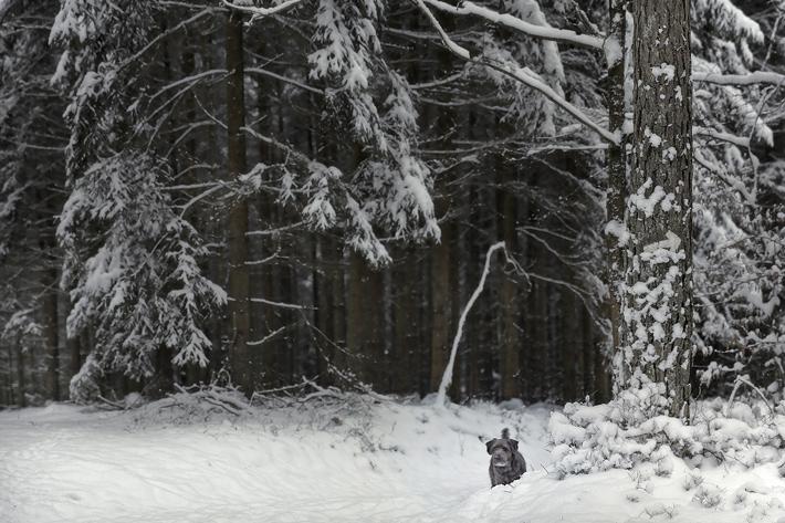 Jörg Marx Photo Dog Snow