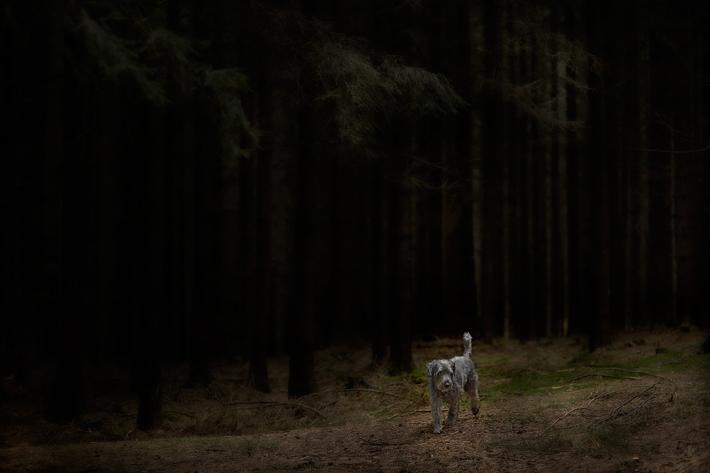 2015-10-Dog-06