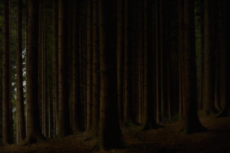 Forest Photo Jörg Marx July 2017