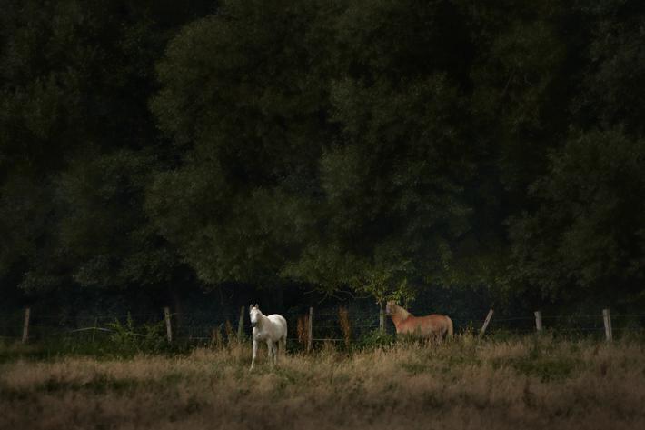 Jörg Marx Photo Horses August 2016