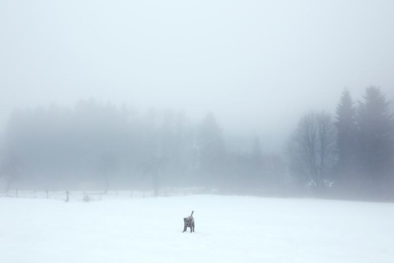 December 2017 Dog Photography