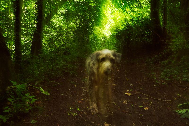 Joerg Marx Fotografie Hund