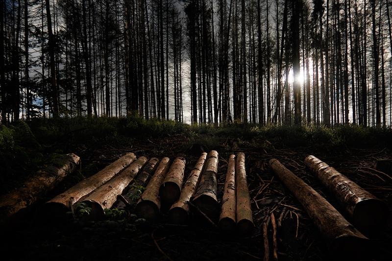 Marx-August-2021-dark forest sun summer
