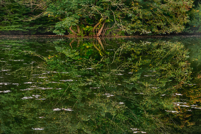 2021-Marx-Photography-September-Landscape-Tree-Lake