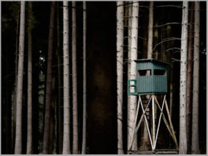 Tree Stand | pt. 1