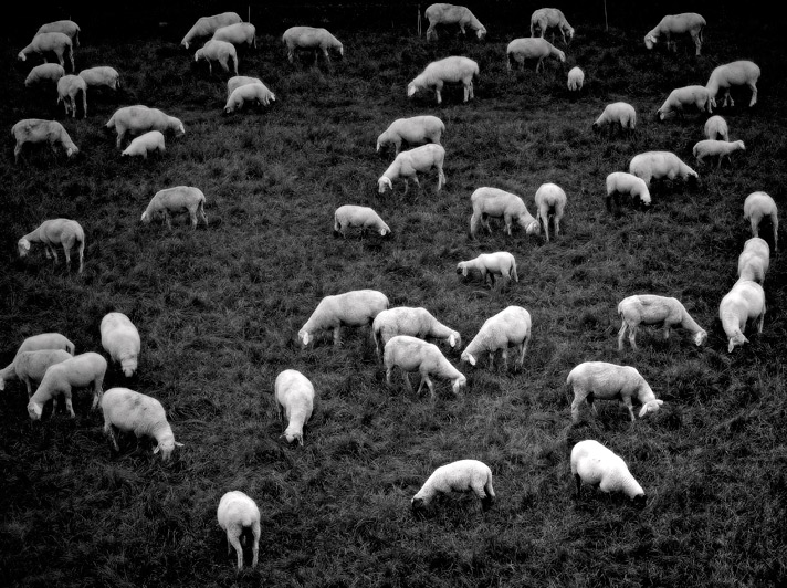 Its-about-Sheep-4