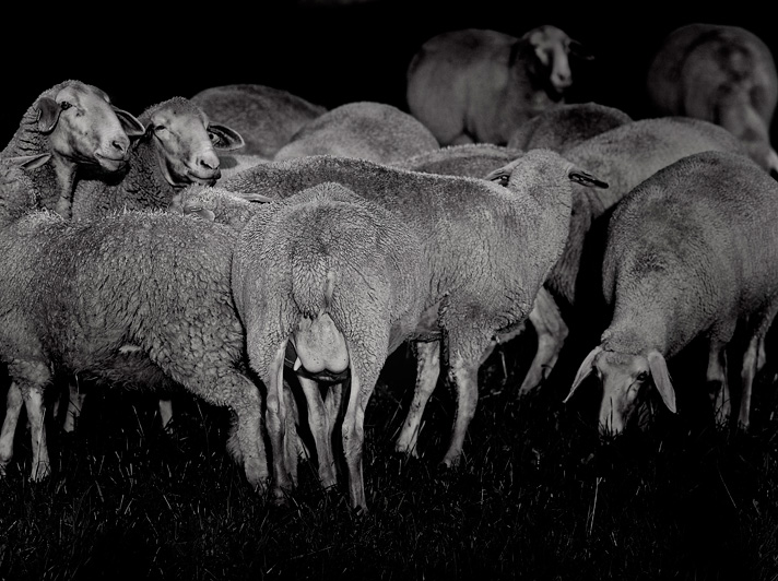 Its-about-Sheep-5