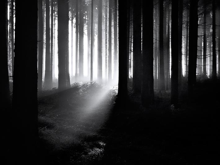 November-Forest-1