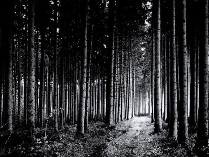 November-Forest-2