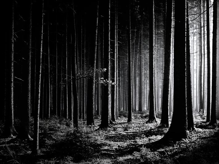 November-Forest-3