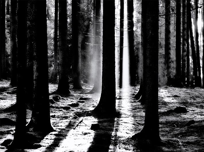 November-Forest-4