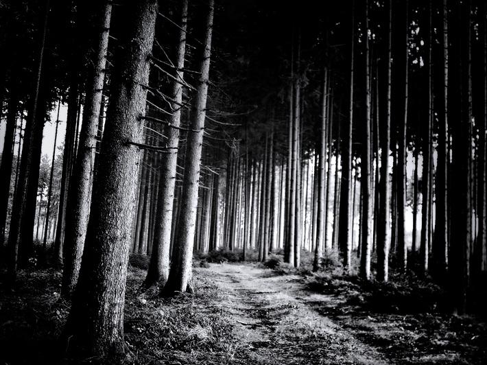 November-Forest-5