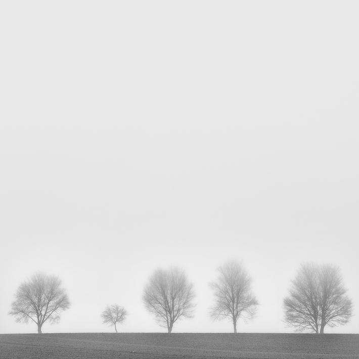 Leafless-04