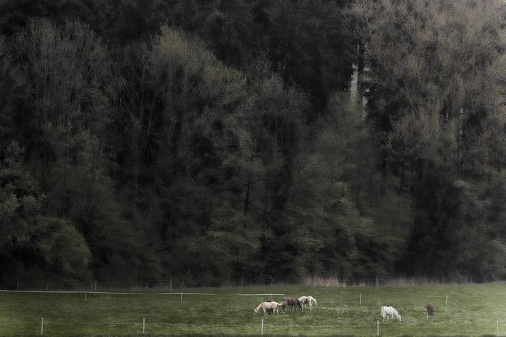 Horses_MG_5190