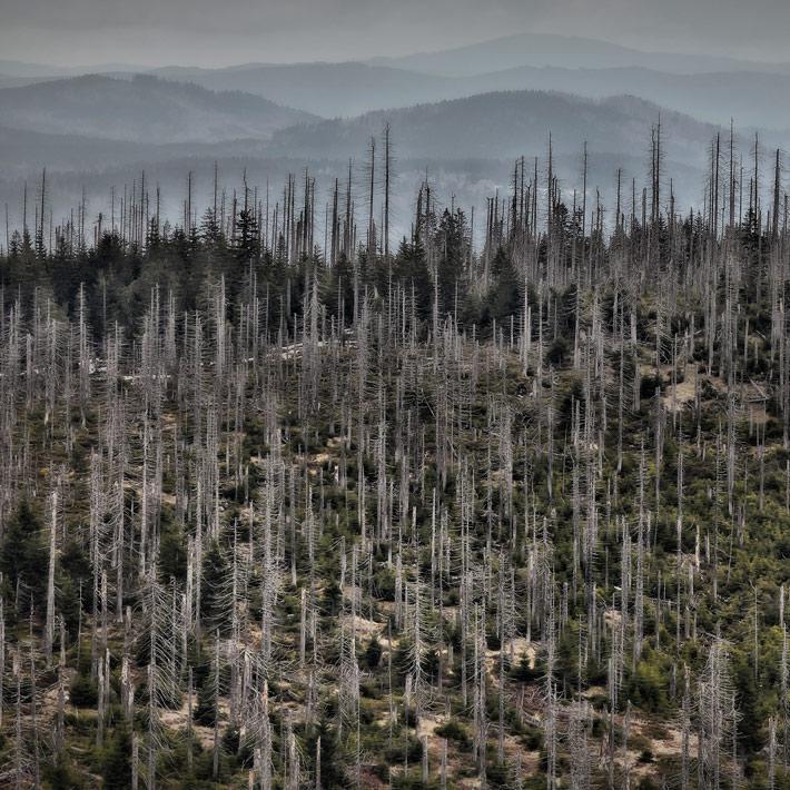 A-Forest-Wilderness--1