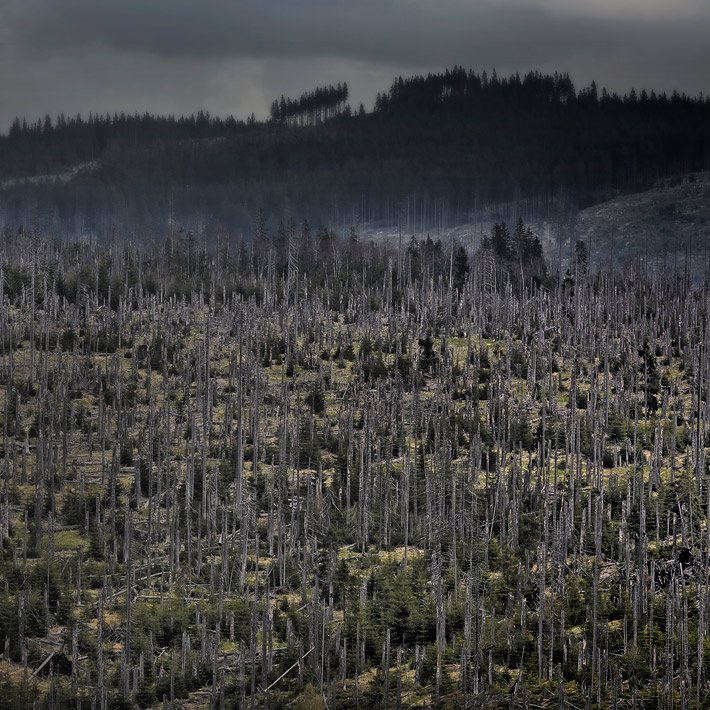 A-Forest-Wilderness--2