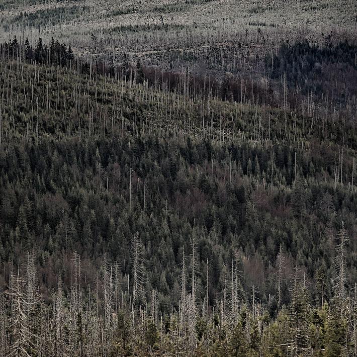 A-Forest-Wilderness--3