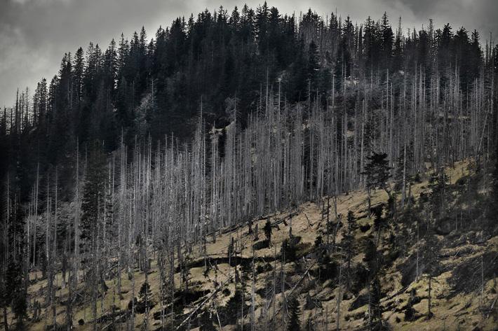 A-Forest-Wilderness--5