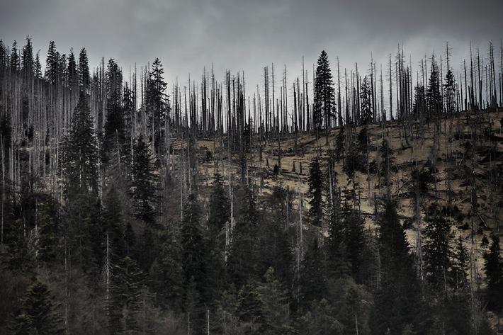A-Forest-Wilderness--6