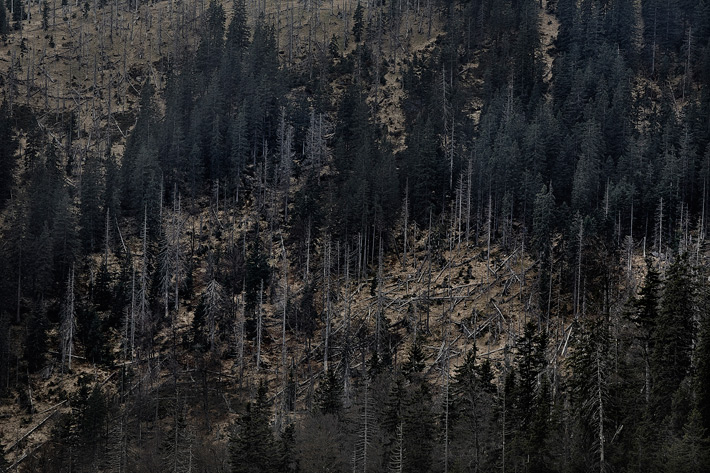 A-Forest-Wilderness--7