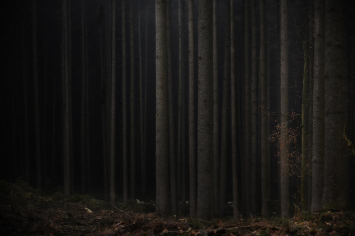 Trees Photography Jörg Marx