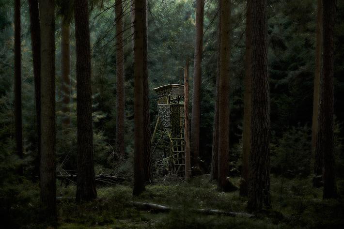 TreeStandPt2-1