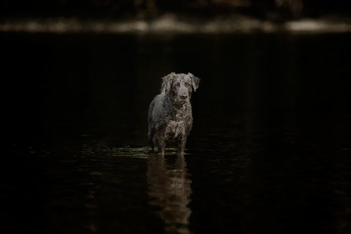 Jörg Joerg Marx Photography Dog Crossing the Water Behance photography trees Danube Donau river fotografie