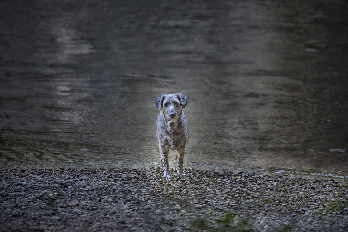 Jörg Marx Photography Dog May 2014