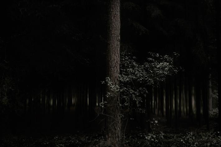 Trees Photography Jörg Marx 02