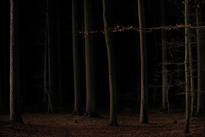 December 2014 Jörg Marx Trees