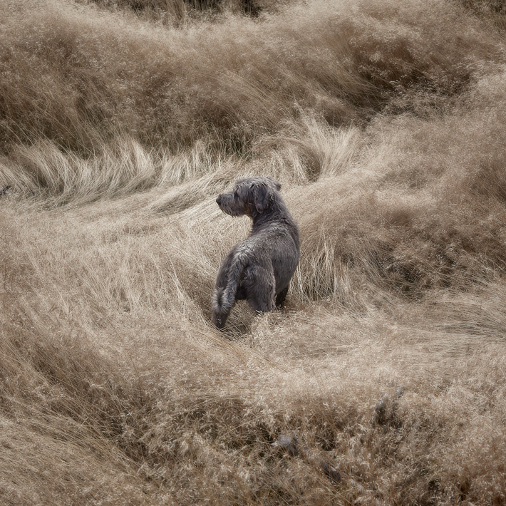 Web-Dogscapes-2-2
