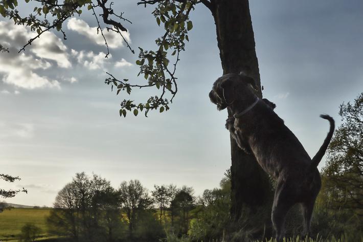 Dog Photography Jörg Marx