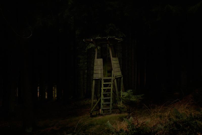 november forest -5