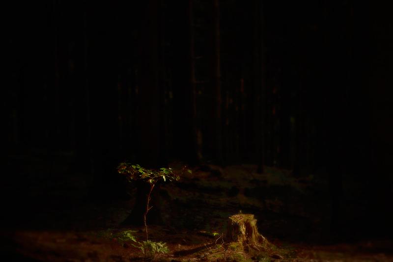 november forest -6