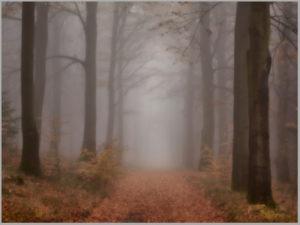 November Forest │ pt. 2