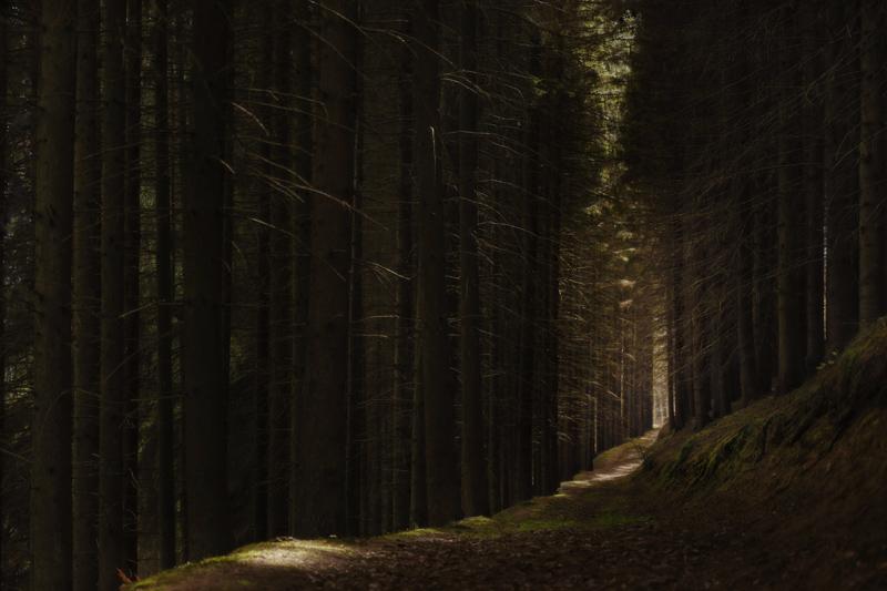 trees Jörg Marx photography April 2017