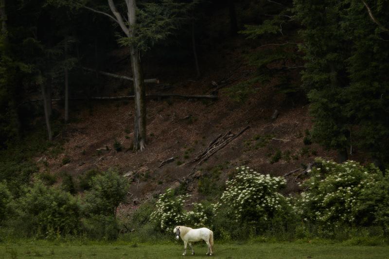 June 2017 Jörg Marx Photography Horse