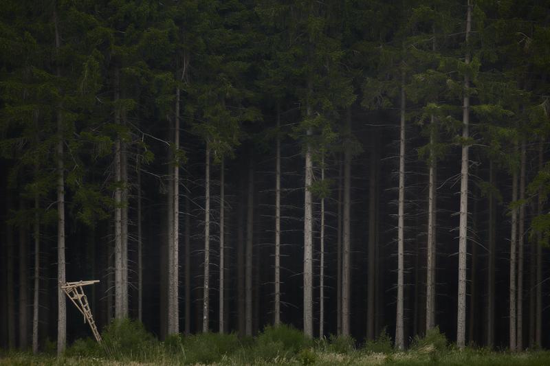 June 2017 Jörg Marx Photography Deerstand