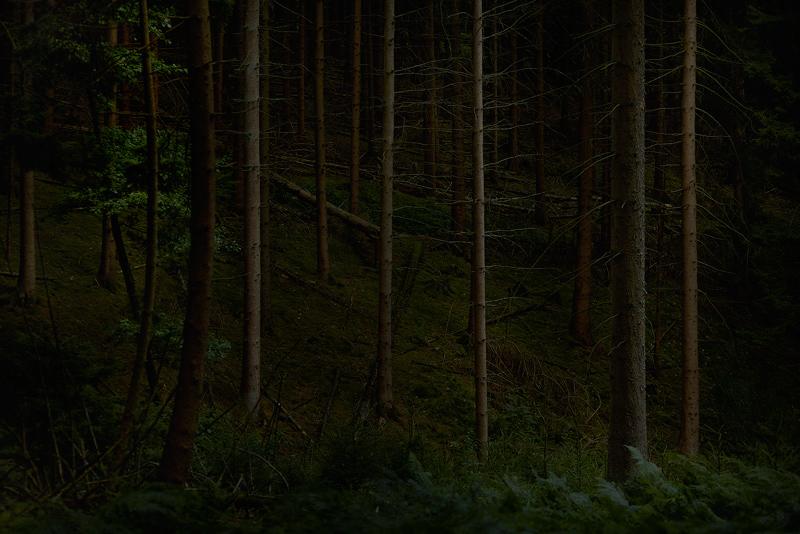 Forest Wald Jörg Marx Foto July 2017