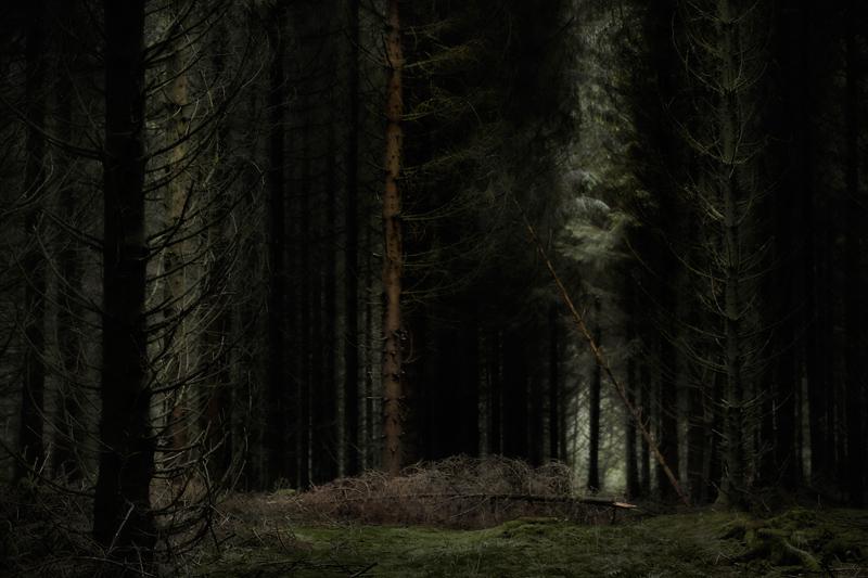 January 2018 Forest Photography Jörg Marx