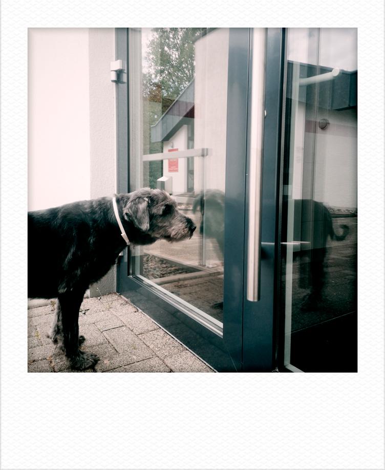 Heart of a dog - Photography Jörg Marx