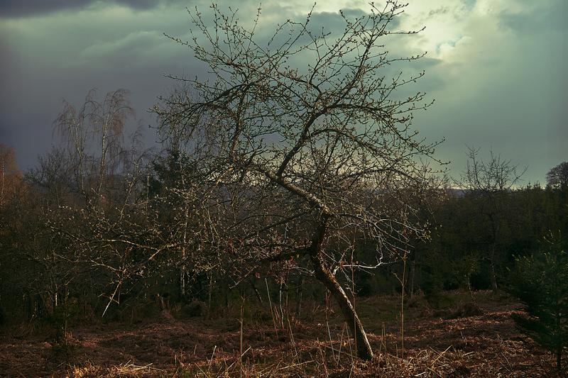 Jörg Marx Photo Tree dark sky