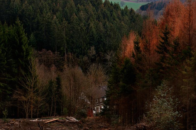 Jörg Marx Photo house forest
