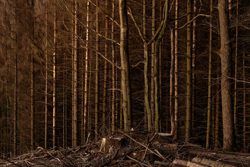 Jörg Marx Photo Trees light